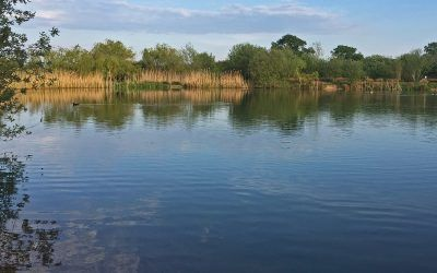 main lake 2 xlcarp fisheries ingatestone