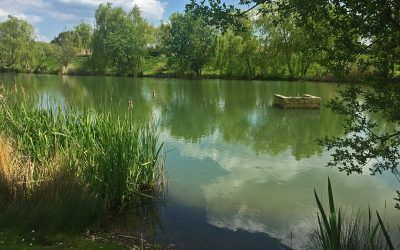 valley lake xlcarp fisheries ingatestone