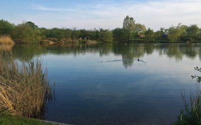 main lake xlcarp fisheries ingatestone