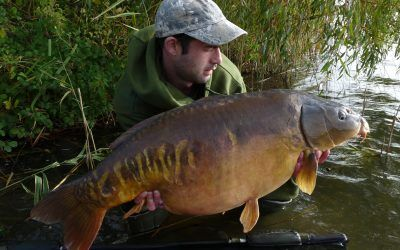 xlcarp fisheries ingatestone